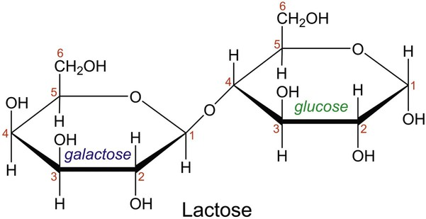 Lactose Structure Gallery