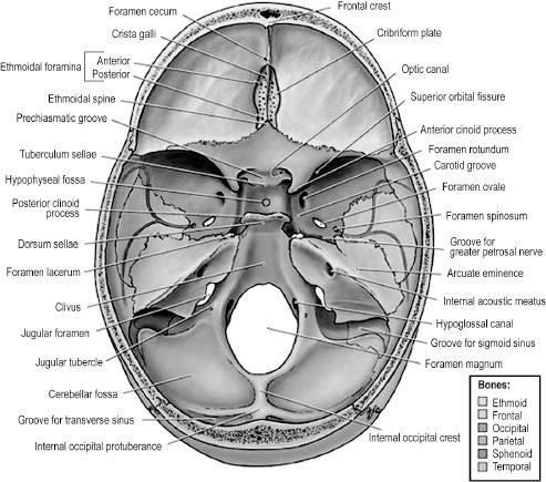 craniofacial anatomy and embryology | pocket dentistry, Human Body