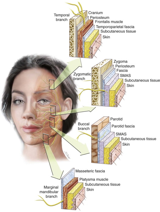 What Is Facebow Transfer And Registration also The Anatomy Of The Face Mouth And Jaws furthermore 6203166 further 1604 likewise 70a75350 4d5d 11e3 918f 3fffffe8ff9c Placenta Structure Labeled Diagram. on orientation in anatomy