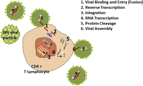 Oral Lesions Associated with Human Immunodeficiency Virus