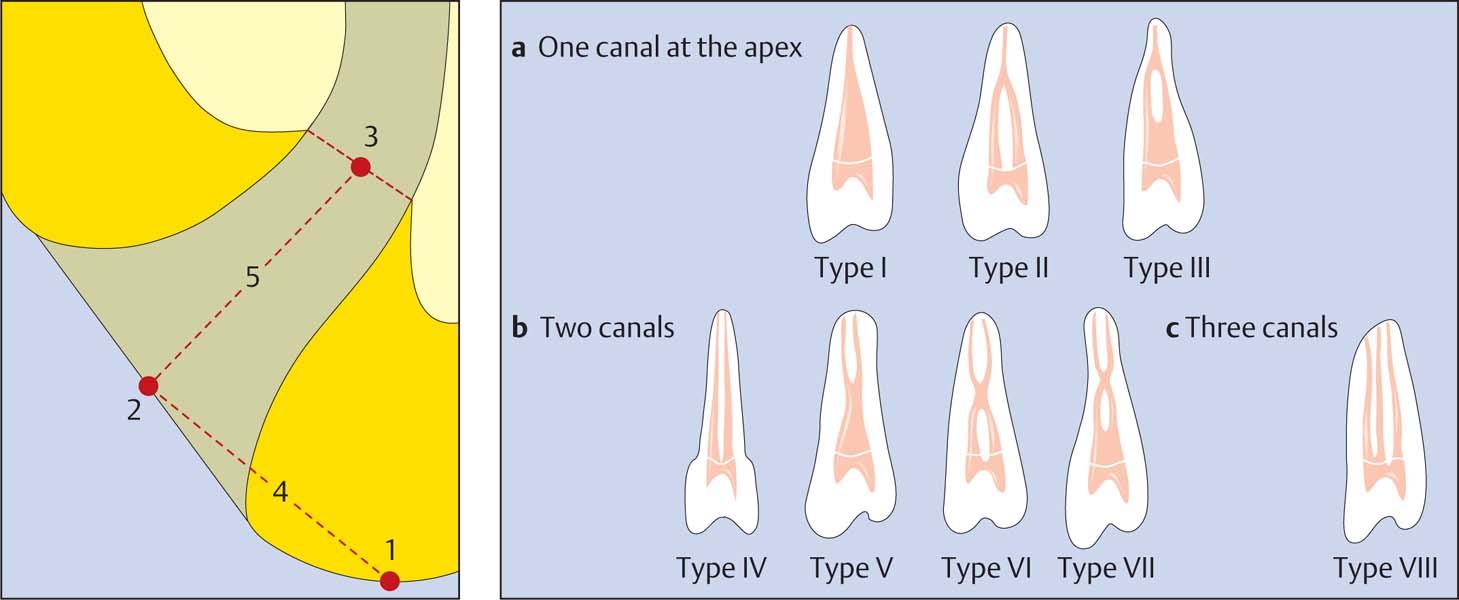 6 Anatomy | Pocket Dentistry