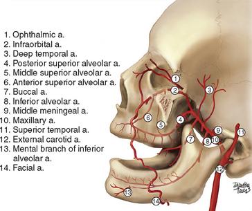 22 Applied Anatomy For Dental Implants Pocket Dentistry