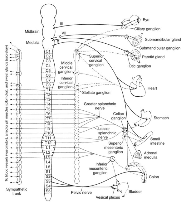 diagram of bladder and colon