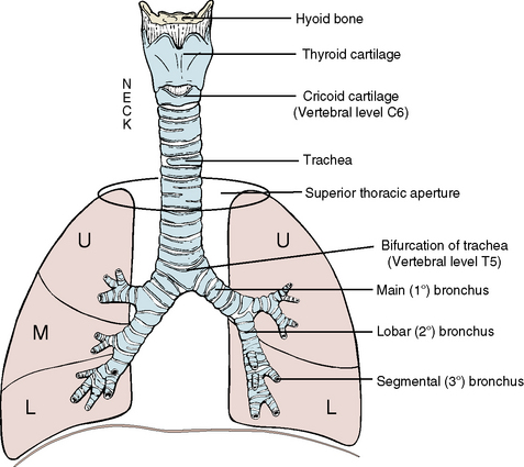 3 the thorax pocket dentistry image ccuart Gallery