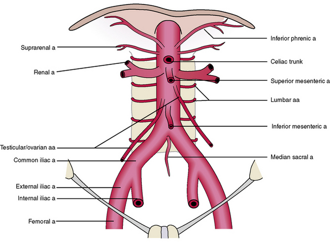 llustration of the abdominal aorta and branches | Download ...