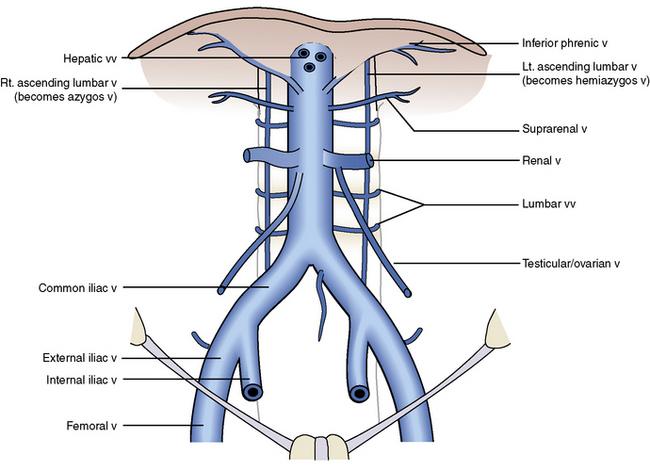 Abdominal venous anatomy