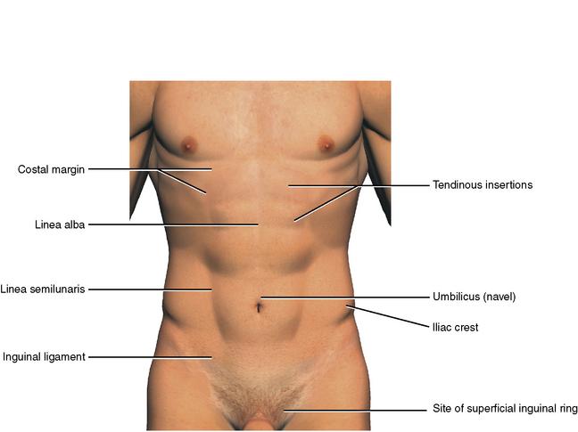 4: The Abdomen, Pelvis, and Perineum | Pocket Dentistry