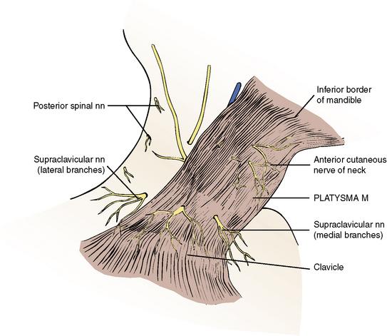 5: The Neck | Pocket Dentistry