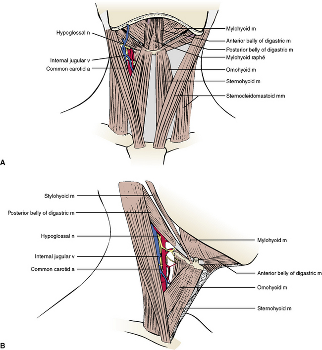 5: The Neck   Pocket Dentistry