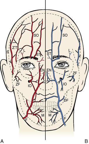 7: The Head by Regions | Pocket Dentistry