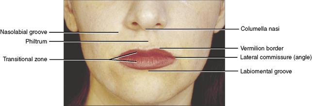 anatomy week 1 (chapter 2) - StudyBlue |External Lip Anatomy