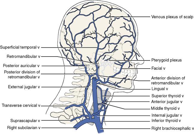 Venous anatomy neck