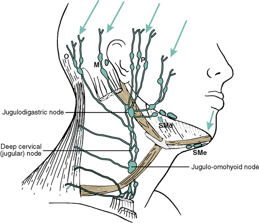 8: Systemic Anatomy of the Head and Neck | Pocket Dentistry