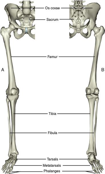 10: The Lower Limb | Pocket Dentistry