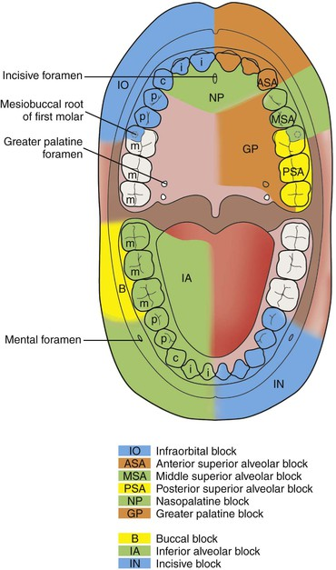 the basics of tongue lacerations