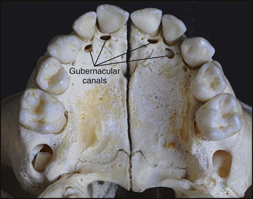 10  physiologic tooth movement  eruption and shedding