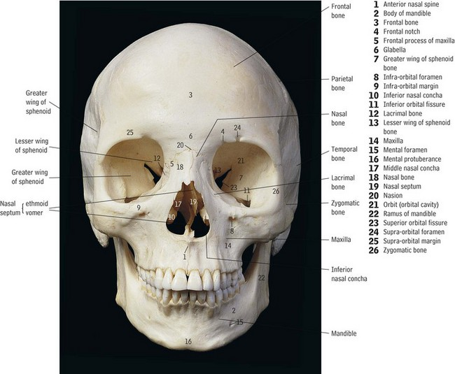 4 Head And Neck Anatomy And Physiology Pocket Dentistry