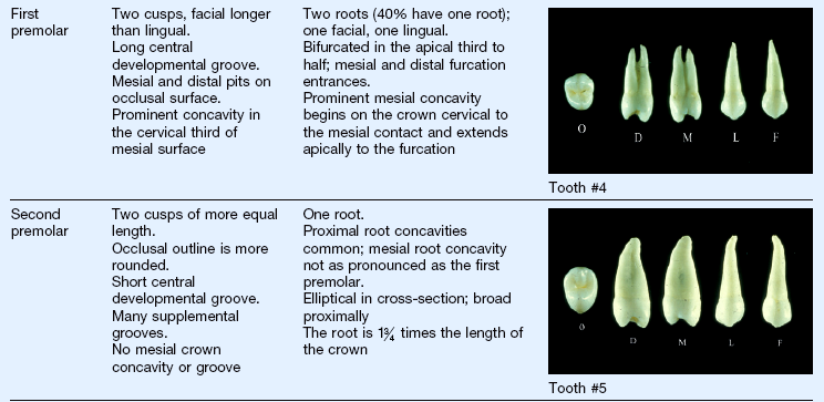 5: Clinical Oral Structures, Dental Anatomy, and Root Morphology ...