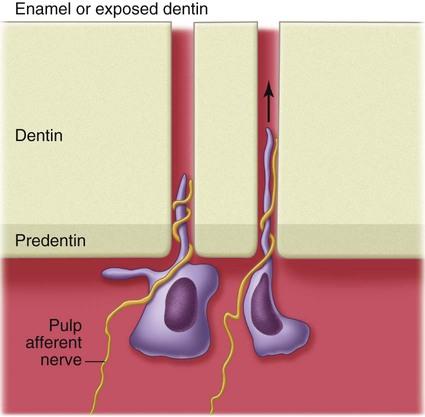Damaged nerve endings around the vagina