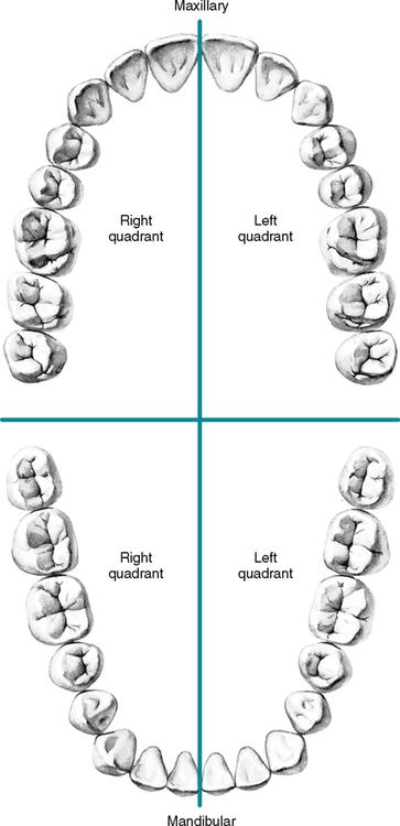 dentition