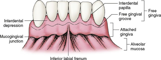 8: Supporting Structures: The Periodontium | Pocket Dentistry