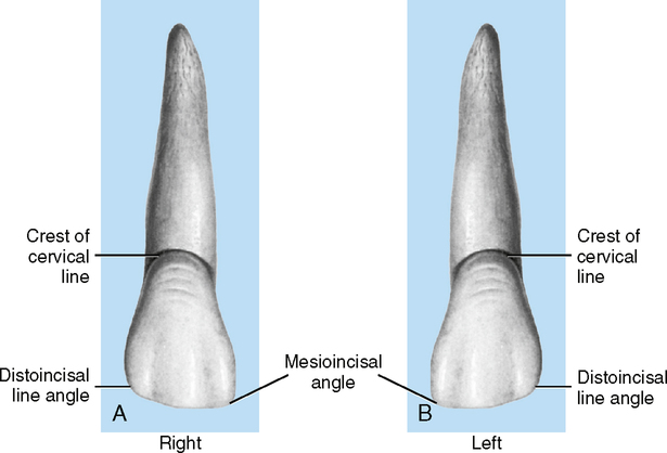 10: Tooth Identification | Pocket Dentistry