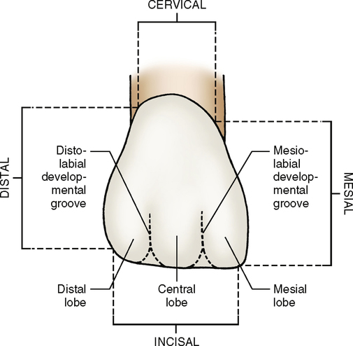 12: Incisors | Pocket Dentistry
