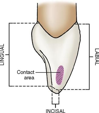Image Gallery incisor anatomy