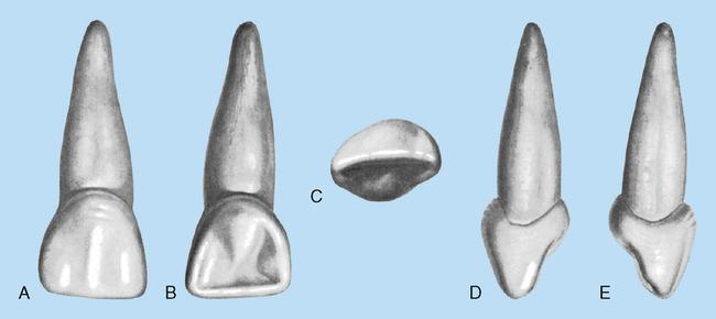 16 Deciduous Dentition Pocket Dentistry