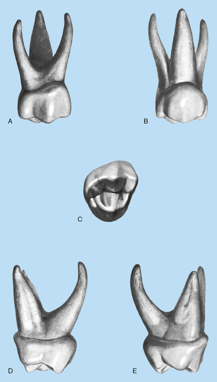 16 Deciduous Dentition Pocket Dentistry