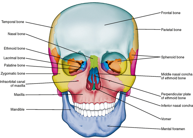 Anterior Skull Diagram Wiring Source