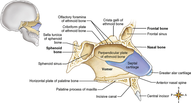 27: Nose, Nasal Cavity, and Paranasal Sinuses | Pocket Dentistry