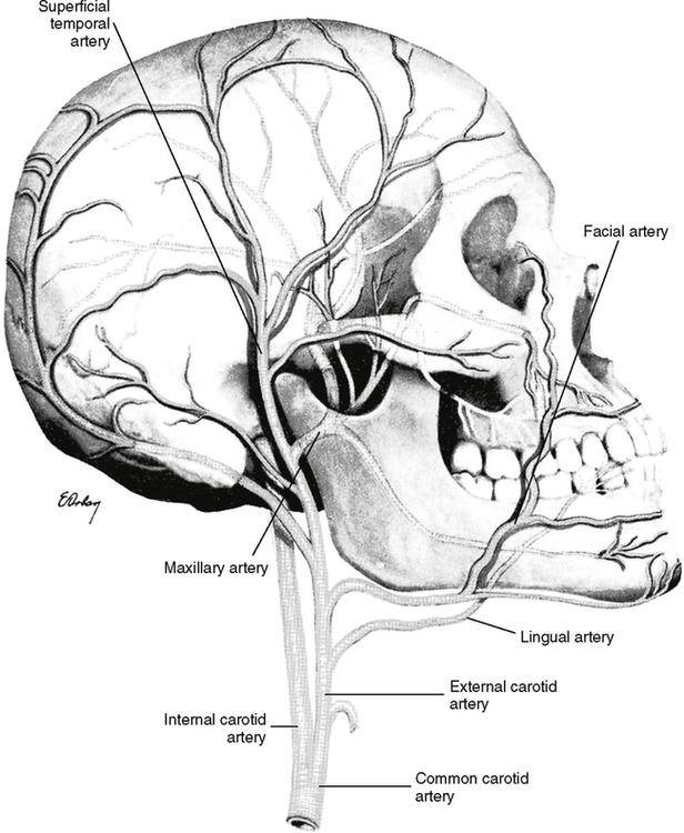 32 arterial supply and venous drainage pocket dentistry Mouth Diagram Labeled 32 1 general distribution of arteries from the lower part of the neck up through the skull area from dubrul el sicher s oral anatomy ed 7 st louis