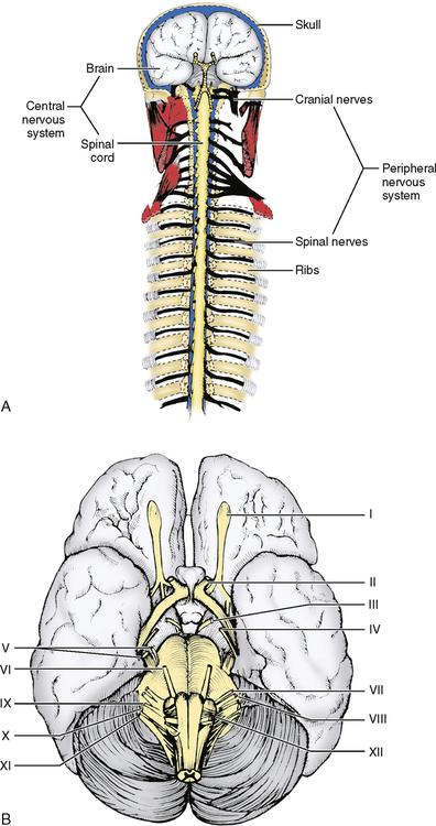 34: Nervous System | Pocket Dentistry