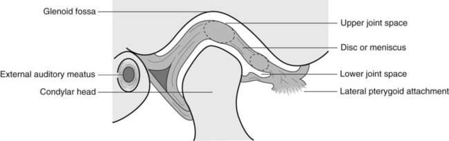 30 the temporomandibular joint pocket dentistry : tmj joint diagram - findchart.co