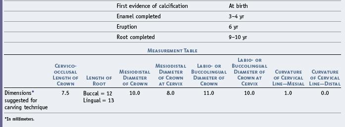 11: The Permanent Maxillary Molars | Pocket Dentistry