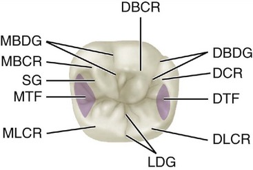 Names of teeth, tooth parts, diastema lengths in lorises and pottos