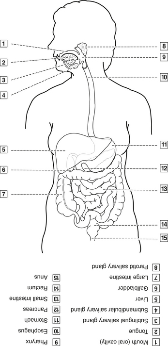 figure 3 16 organs of the digestive system