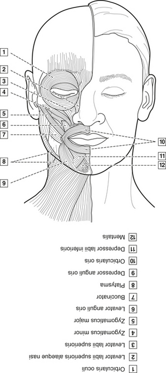 Neck Muscle Anatomy Worksheet Coloring Pages