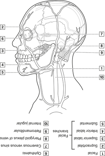 Head And Neck Anatomy Coloring Book Photo Album ...
