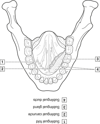 image - Dental Anatomy Coloring Book
