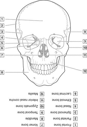 4 Head Neck And Dental Anatomy Pocket Dentistry