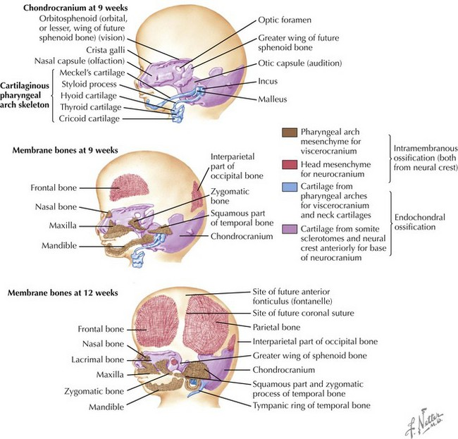 Development associated with cranial bone fragments