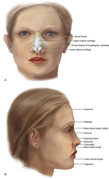 38 Aesthetic Alteration Of The Nose Evaluation And Surgery