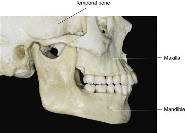 1  functional anatomy and biomechanics of the masticatory