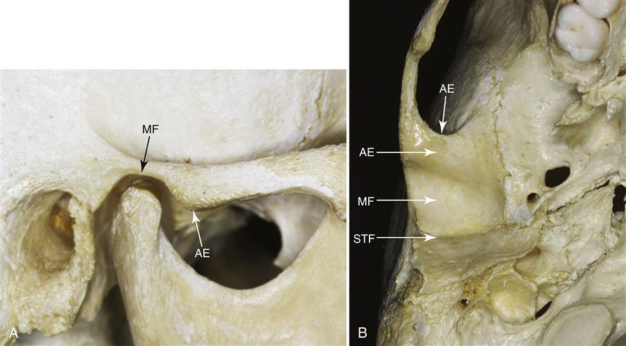 1 Functional Anatomy And Biomechanics Of The Masticatory System