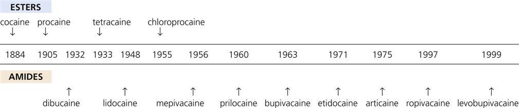 excretion of lidocaine