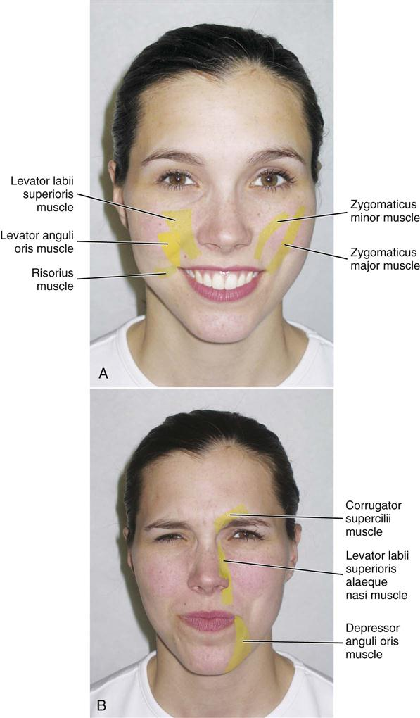 Other Action of facial muscles