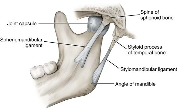 5. temporomandibular joint | pocket dentistry, Human Body