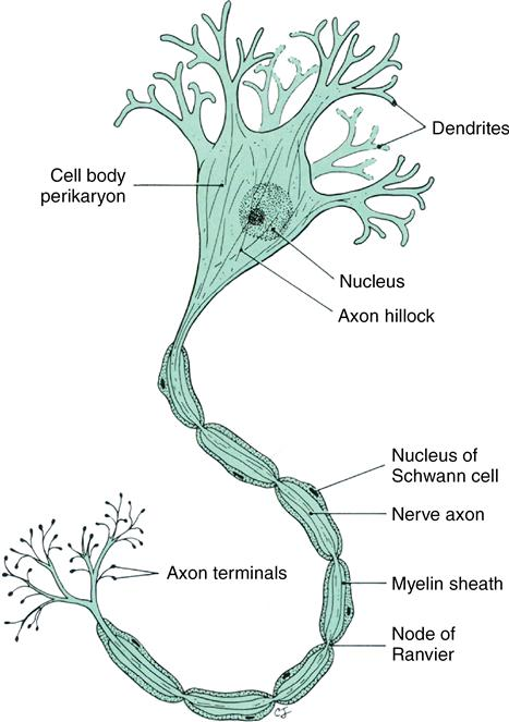 2 structure and function of cells  tissues  and organs